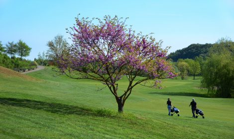 Campi da golf e impianti sportivi
