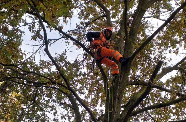 Il tree climbing