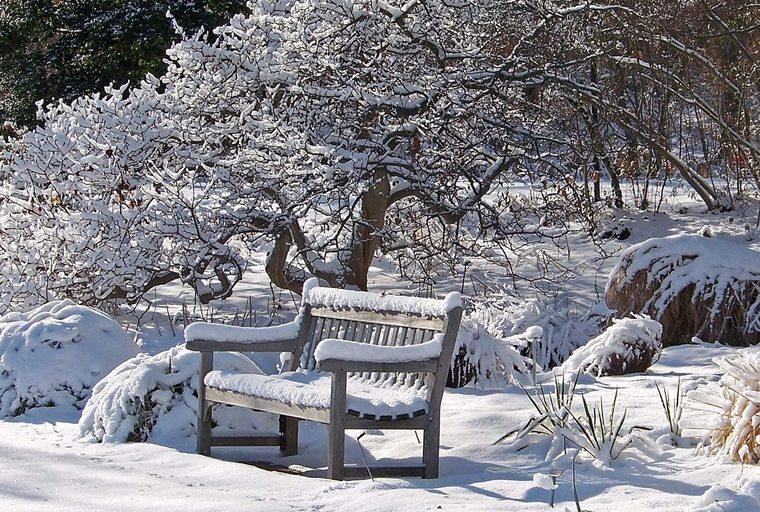 Pratiche per il benessere in giardino, meditare d'Inverno