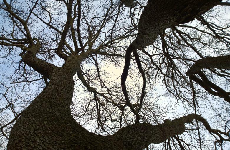 Il calendario degli alberi