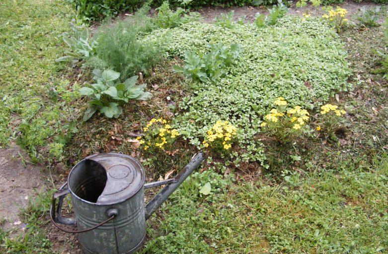 A che serve il giardino?