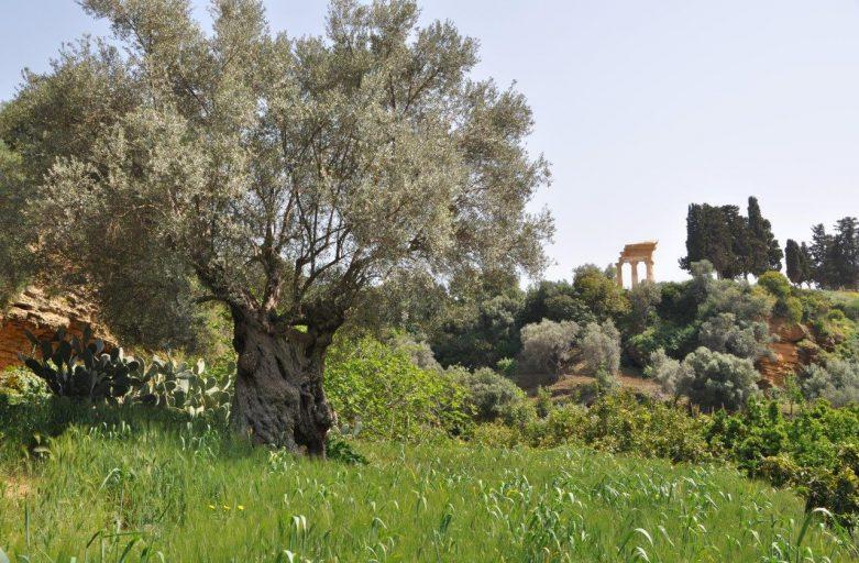Il giardino della Kolymbetra